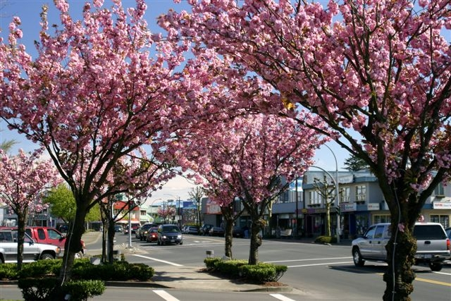 Campbell River Spring
